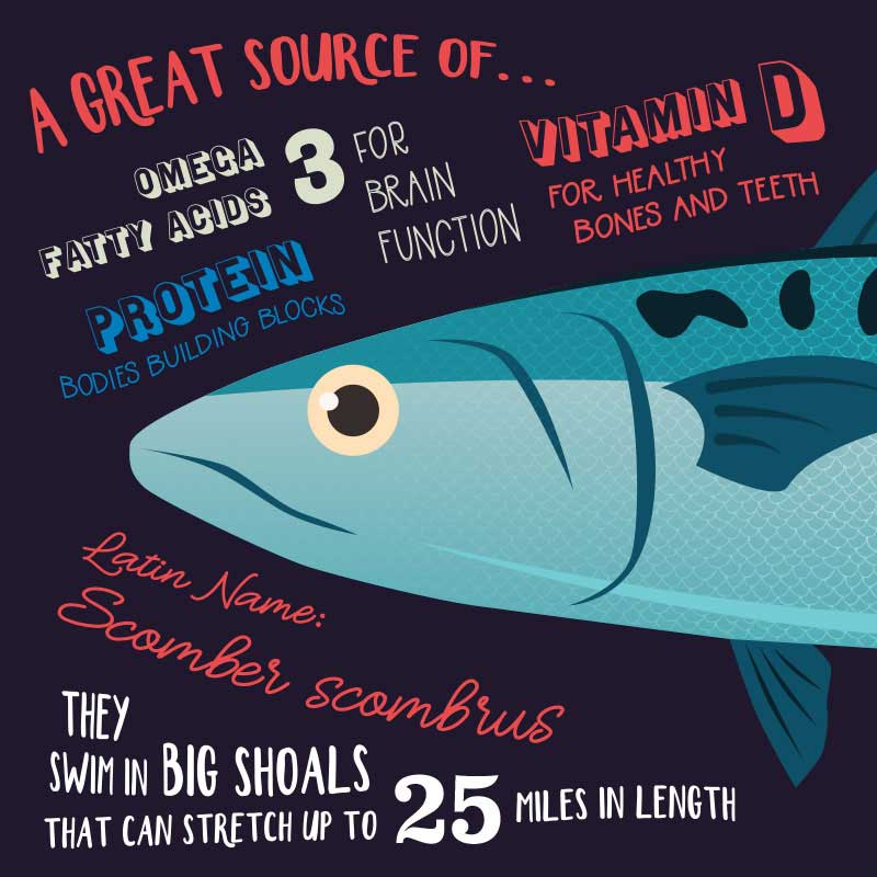 fish-facts-mackeral-illustration-infographic